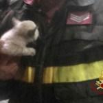 Un gattino intrappolato nel motore dell'auto, liberato a Marotta dai vigili del fuoco dopo un viaggio di 500 chilometri