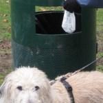 Cani in aumento lungo le strade di Senigallia ma i cestini per la raccolta delle feci sono pochi
