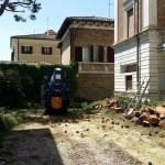 Brutte notizie per la natura: abbattuto a Senigallia un altro pino centenario