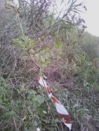 SENIGALLIA alberi estirpati misa2019-10-22 (3)