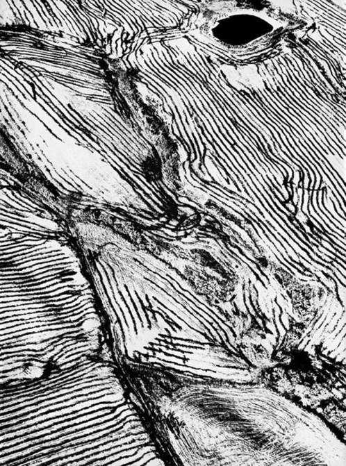SENIGALLIA mostra giacomelli mario2020 (5)
