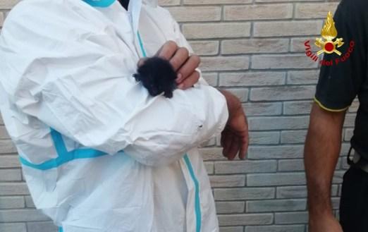 MONTE SAN VITO gattino sotto marciapiede recuperato2021-09-08 (1)