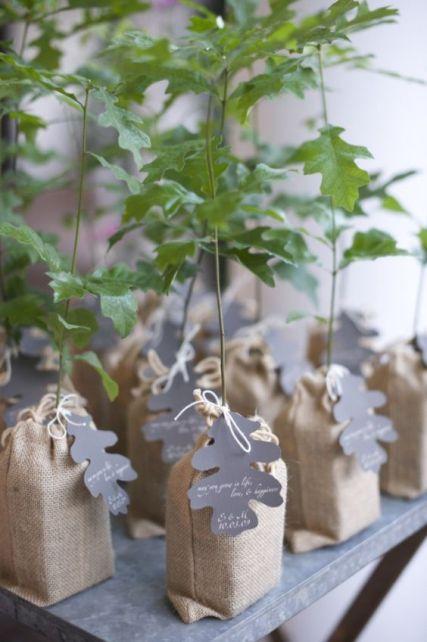 arbre-a-planter-cadeaux-invites
