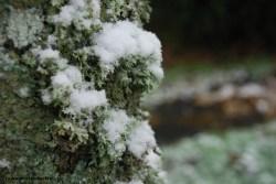 01_neige_02_18