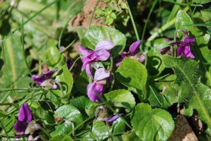 violette_p__0318
