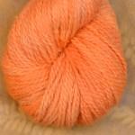 Baby Llama - French Marigold