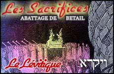 Abattage de Bétail