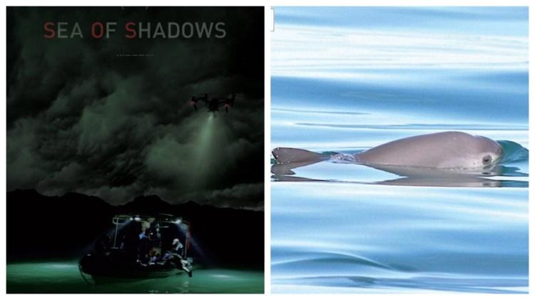"""Presentaron """"Sea of Shadows"""" el documental de la vaquita marina (Foto: Redes sociales)"""