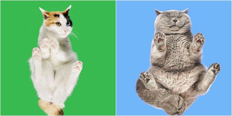Barba ideó un set de fotografía en el que ubicó una mesa de cristal, paró sobre ella a gatos y fue tomando fotos (Crédito: andriusb1)