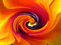 mente-meditazione-emozioni-meraviglie-vita-amore-nutrimento.jpg