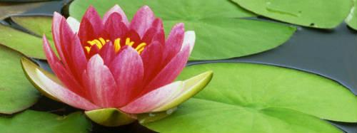 mente-meditazione-loto-osho-dolore-consapevolezza.jpg