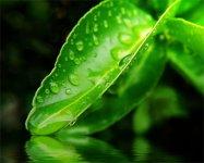 mente-meditazione-salute-luce-amore-serenita.jpg