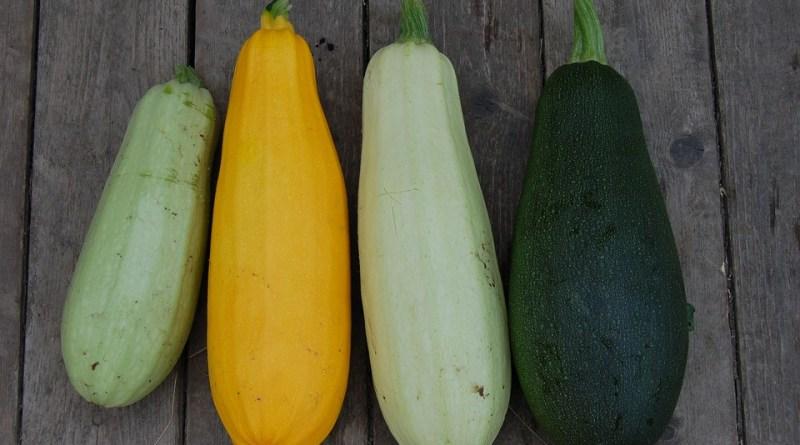 Zucchina valori nutrizionali