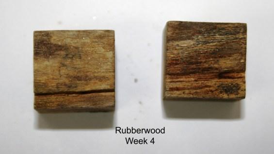 Rubberwood_week 4 (resize)