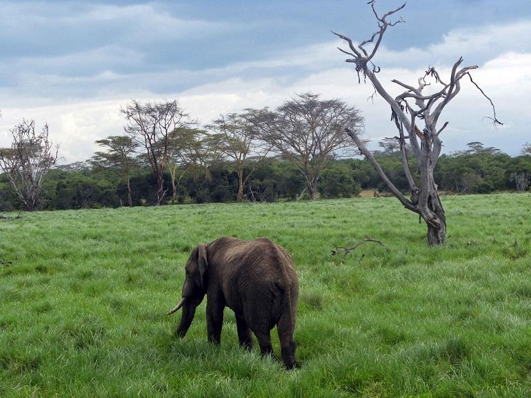 parque-kruger-viajar-a-sudafrica