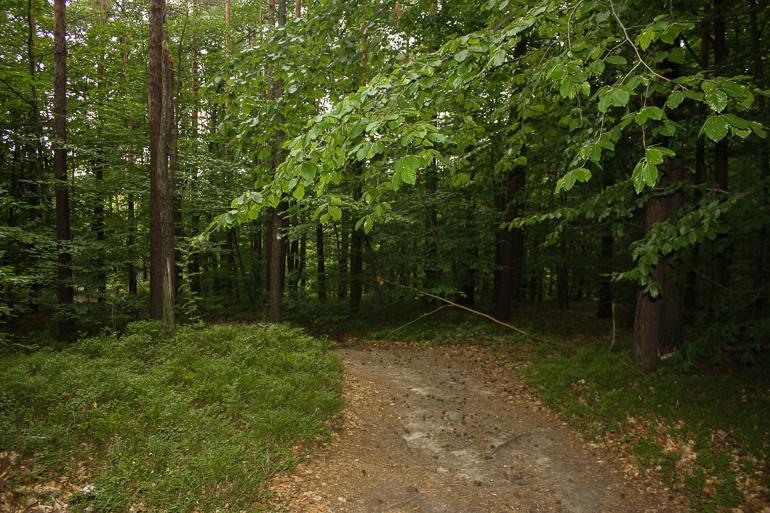 recorriendo-sendero-cinibulka
