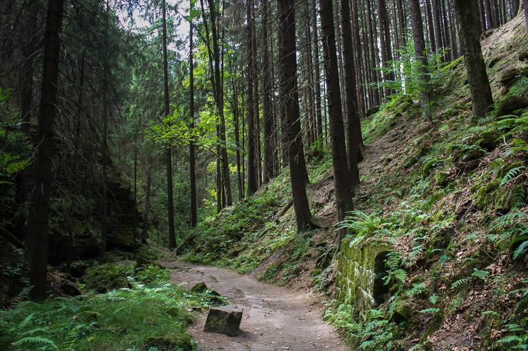 Atravesando el bosque para llegar a la Puerta de Pravčice