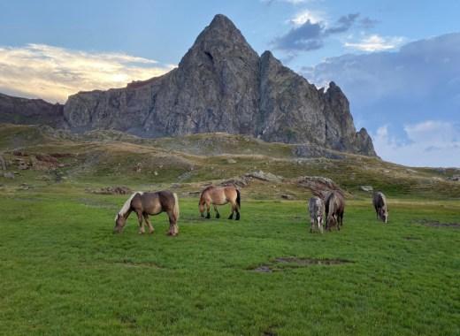 Caballos pastando a los pies del Pico Anayet