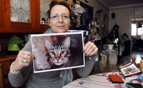 Muriel Gendre pleure encore son chat Plumeau, qui a eu moins de «chance» qu'Oscar, le chat battu marseillais dont la vidéo tourne en boucle sur les réseaux sociaux cette semaine.? - photo gaël baud