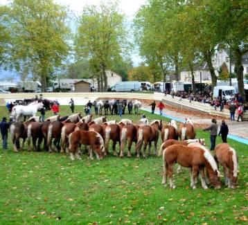 La présentation des ensembles, un moment exceptionnel lors de cette foire aux chevaux. - Gaurat Daniel