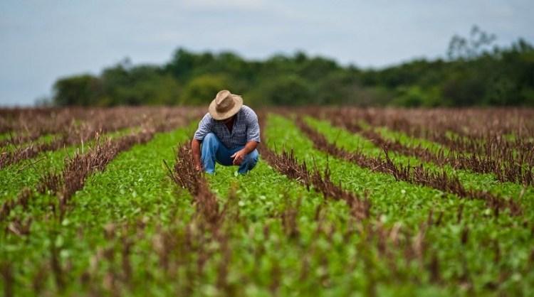 La agricultura de hoy en el mundo | Lampadia