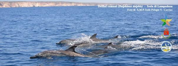 Area Marina Protetta Isole Pelagie