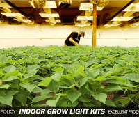 3 Ways to Indoor grow lights | James lamp socket