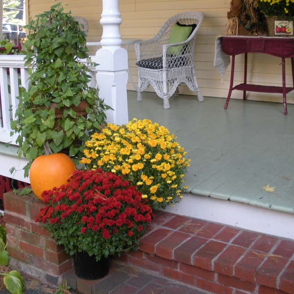 Fall mums on porch steps