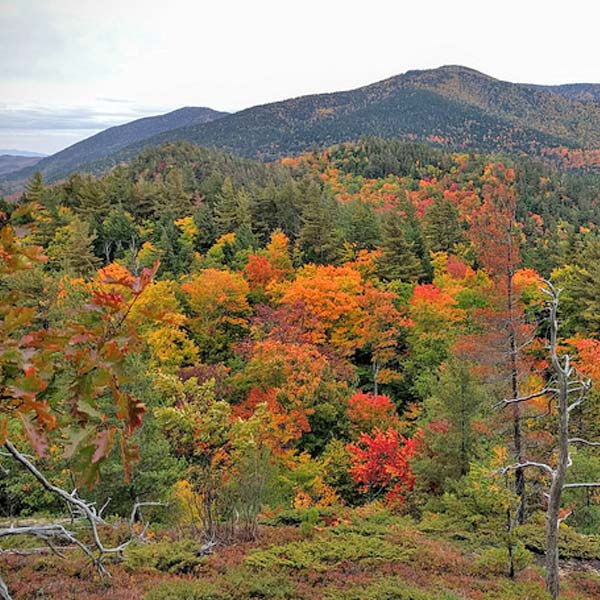 Mountain Forest in Autumn Colors at Lamplight Inn Bed & Breakfast in the southern Adirondacks