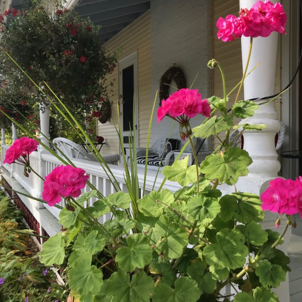 Geraniums on Wrap around porch at Lamplight Inn Bed & Breakfast in Lake Luzerne