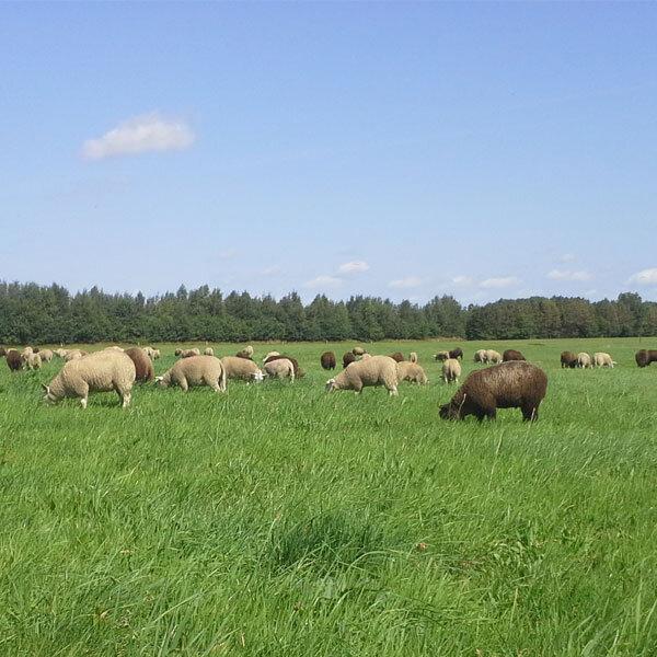 Lammeren-wei-boerderij