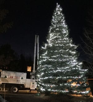 holiday lights installed by LAM Tree Evergreen CO