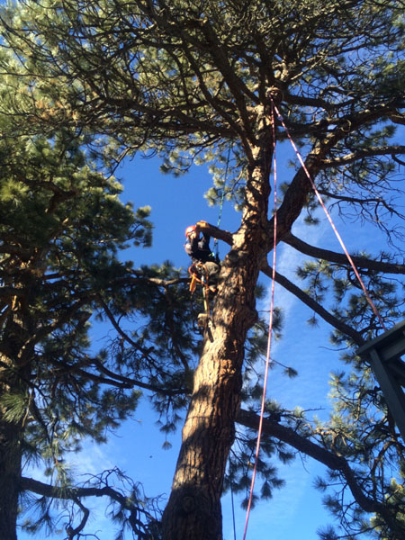 blog tree climbing LAM