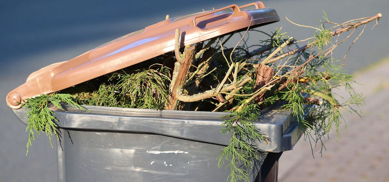 green waste in a plastic garbage bin from fall tree care