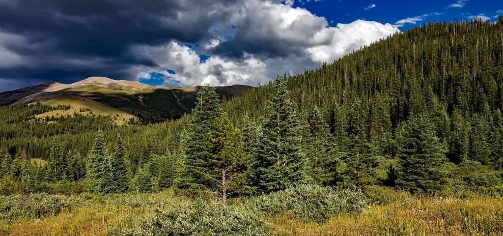 Storm clouds over a conifer-covered hill in Colorado