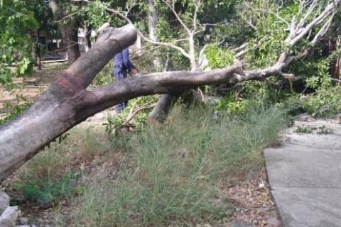 Masiva caída de árboles por fuertes vientos en Neiva 4 27 mayo, 2020