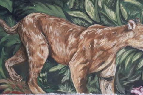 El mural que expone la fauna silvestre del Huila 5 27 mayo, 2020
