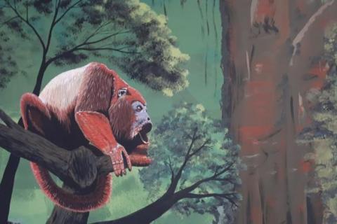El mural que expone la fauna silvestre del Huila 8 27 mayo, 2020
