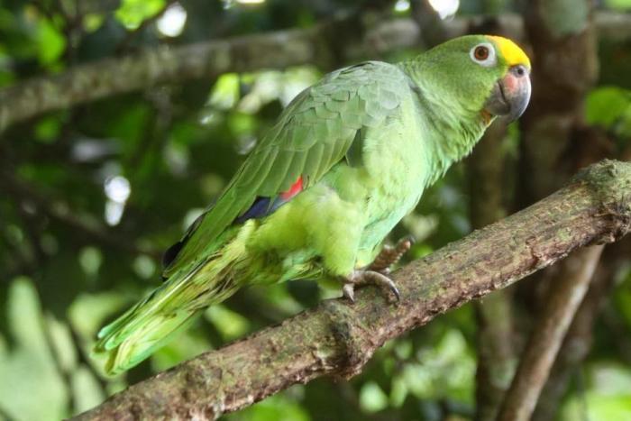 En el Día de la Biodiversidad, disfrute este recorrido virtual por la ecoreserva La Tribuna 10 27 mayo, 2020