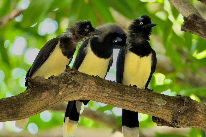 En el Día de la Biodiversidad, disfrute este recorrido virtual por la ecoreserva La Tribuna 11 27 mayo, 2020