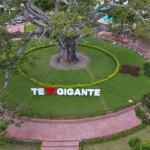 Huila, con los huevos y alverjas más caros en Colombia 3 11 agosto, 2020