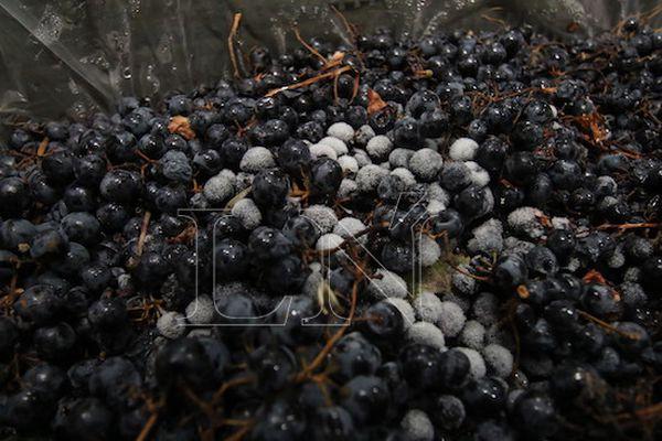 Las uvas vienen congeladas hasta Paraguay desde el Valle de Uco, en la parte alta de Mendoza, pegada a la Cordillera.