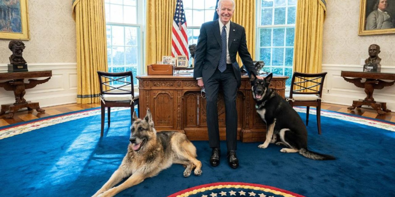 Right-wing group says there's a massive government cover-up involving Joe Biden's dogs