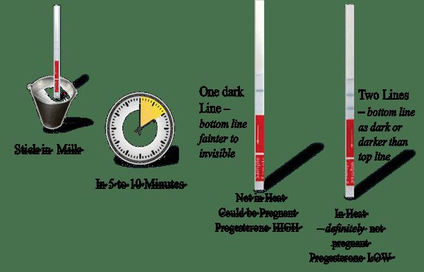 P4Rapid Heat Detection test steps