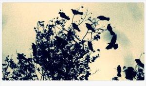 Garret Faber crows