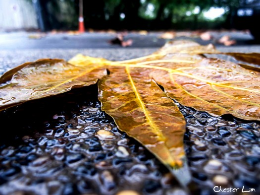 Leaves - Dr. Myles Munroe
