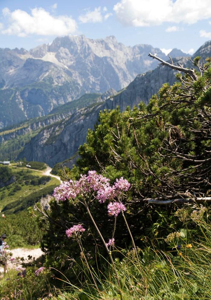 garmisch-partenkirchen-blomma