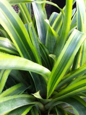 Landcraft Environments Wholesale Tropical Plants for