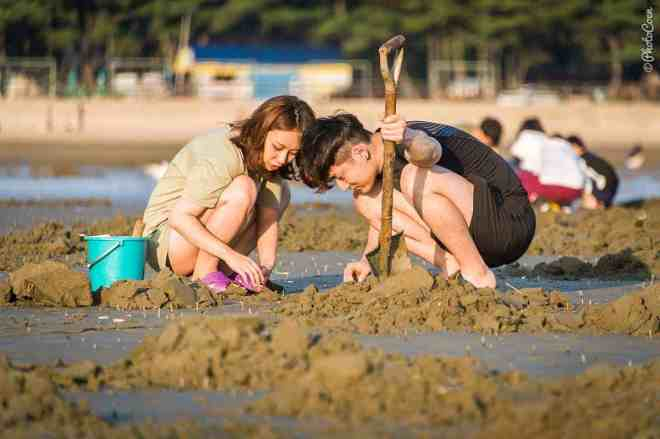 Beach life: here, 2 Koreans in t-shirt and short sitting on the beach, digging in sand and searching for shellfish