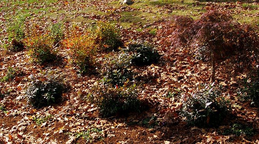 CT Landscaping Tips – December 2013